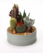 Micro Forces - Mini is IN, like this cactus garden from Costa Farms